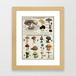 mushroom classification Framed Art Print