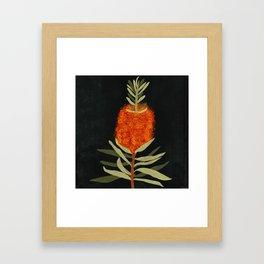Bottlebrush Flower Framed Art Print