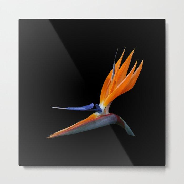 Bird of Paradise DPG160420a Metal Print