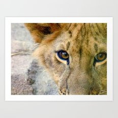 Lion Eyes Art Print