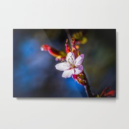 Sakura - Japanese cherry flower Metal Print