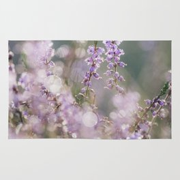 Detail of wild heather growing on a heath with early morning light. Norfolk, UK. Rug