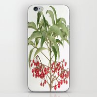 spice iPhone & iPod Skins featuring Spice Berry  by taiche