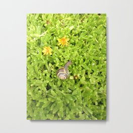 Animal Photography-Snail Metal Print