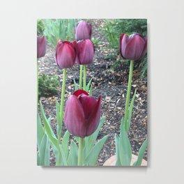 Queen of Night Tulips Metal Print