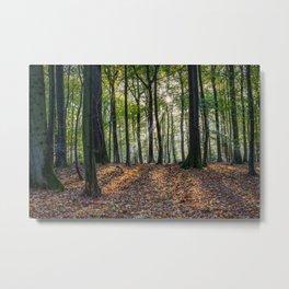 Beech Woodland Sunrise Metal Print