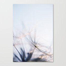 Macro dandelion Canvas Print