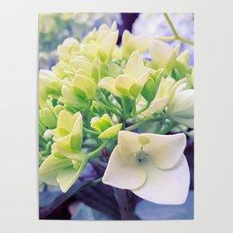 remembering spring Poster
