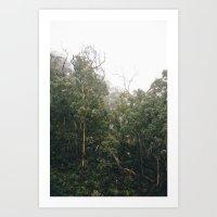 Tasmanian Forest Art Print