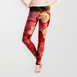 Maui Red Leggings