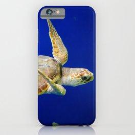 Sea Turtle 1 Marine Animal / Underwater Wildlife Photograph iPhone Case