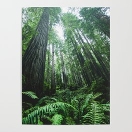 Redwood National Park- Pacific Northwest Nature Photography Poster