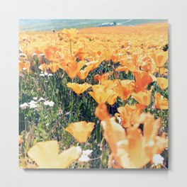 Antelope Valley Poppy Preserve Metal Print