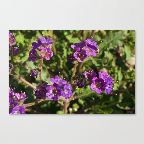 Notch-Leaved Phacelia - Desert Wildflower Canvas Print