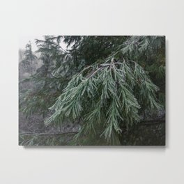 Frozen Evergreen Trees Metal Print