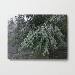 Frozen Evergreen Trees Metal Print