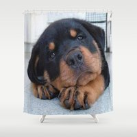 rottweiler Shower Curtains featuring Riley  🐾  The Rottweiler Puppy  🐾 by D.A.S.E. 3
