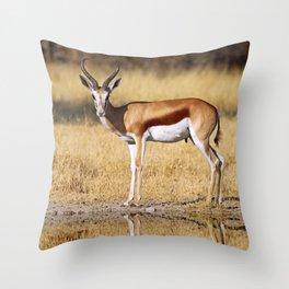 The double Springbok, Africa wildlife Throw Pillow