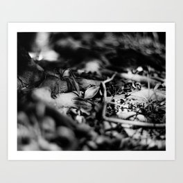 FALLEN SILVER - Fomapan Creative 200 (4x5 film) Art Print