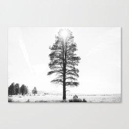 Black and White Pine Canvas Print