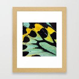 Butterfly Wing #19 Gerahmter Kunstdruck