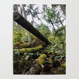chopped down Poster