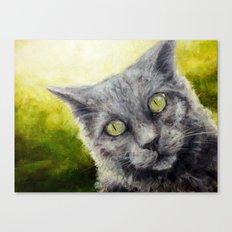 Kitty in the Summer Sun Canvas Print