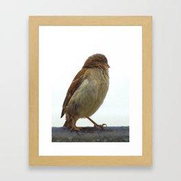 Sparrow a Glance Back Framed Art Print