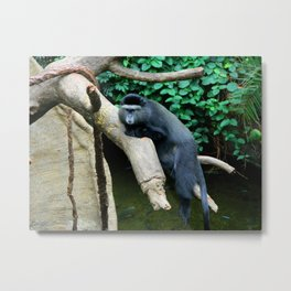 Unimpressed Monkey Metal Print