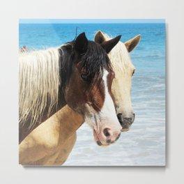 Watercolor Horse 44, Assateague Pony, Assateague, Maryland, Rapt Attention Metal Print