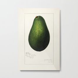 Avocado (Persea) (1916) by Amada Almira Newton8 Metal Print