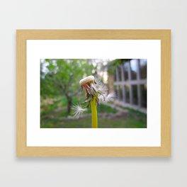 Made a wish! Framed Art Print