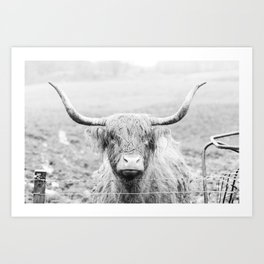 Fiona the Highland Coo Art Print
