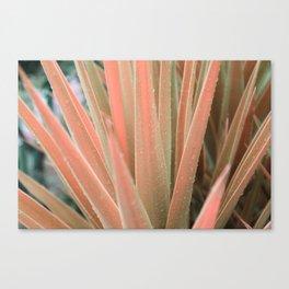 Pink aloe Canvas Print