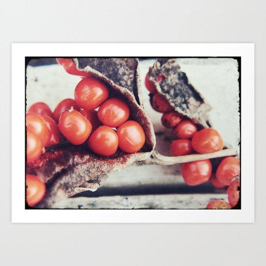 Seed Pods III Art Print