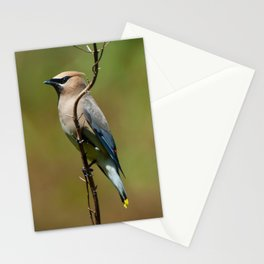 Cedar Waxwing Portrait Stationery Cards