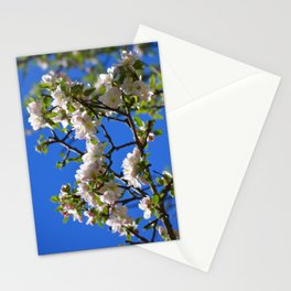 Apple Blossom Branch Stationery Cards