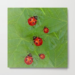 RED LADY BUGS ON GREEN LEAVES DESIGN ART Metal Print