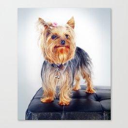 Super Pets Series 1 - Super Treble Canvas Print