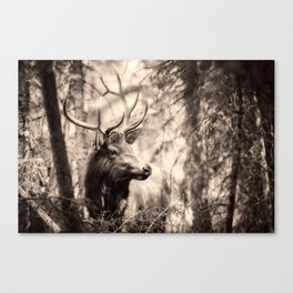 Watchful Elk Canvas Print