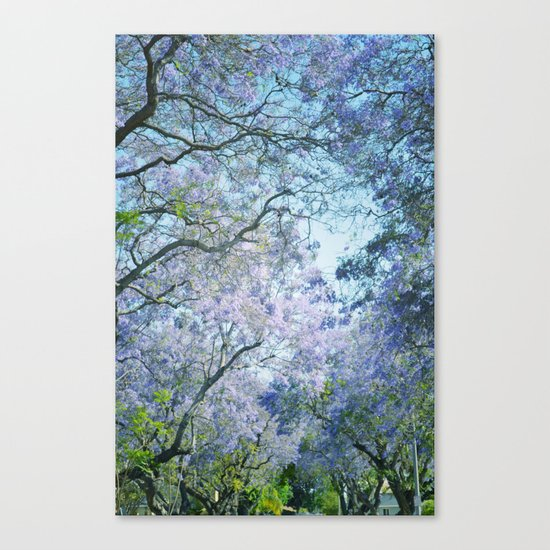 Jacaranda Canopy Canvas Print