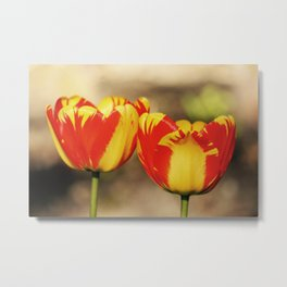 Red & Yellow Tulips Metal Print