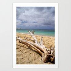 Tropical Beach Driftwood Art Print