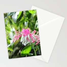 Pink and Green Medinilla Tropical Flower Stationery Cards