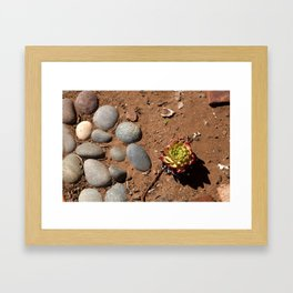 Succulent Rocks Framed Art Print