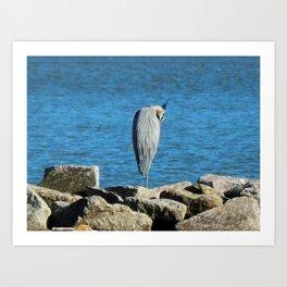 Heron rocks Art Print