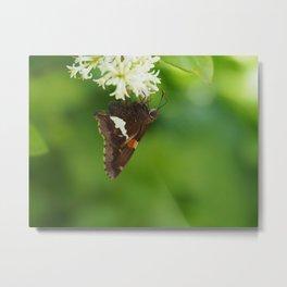 Feasting Butterfly Metal Print