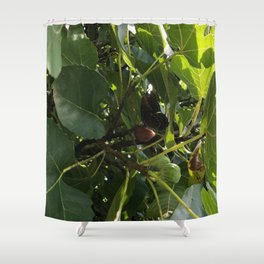 Monarch Butterfly In A Fig Tree Shower Curtain