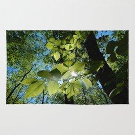 Sunlight Canopy IV Rug