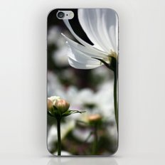 New Breezy  iPhone & iPod Skin